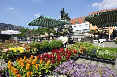 Marktplatz Blumen
