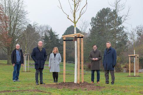 Bauverein stiftet drei Bäume